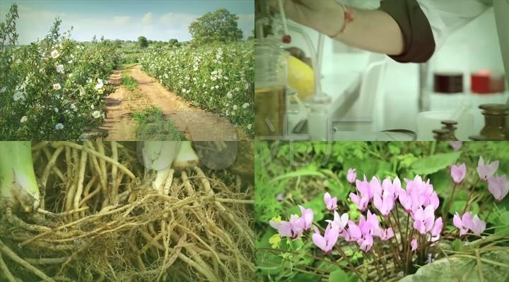 护肤品植物护肤技术科学提炼精华成份