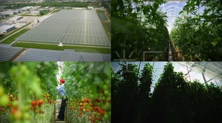 现代农业农产品