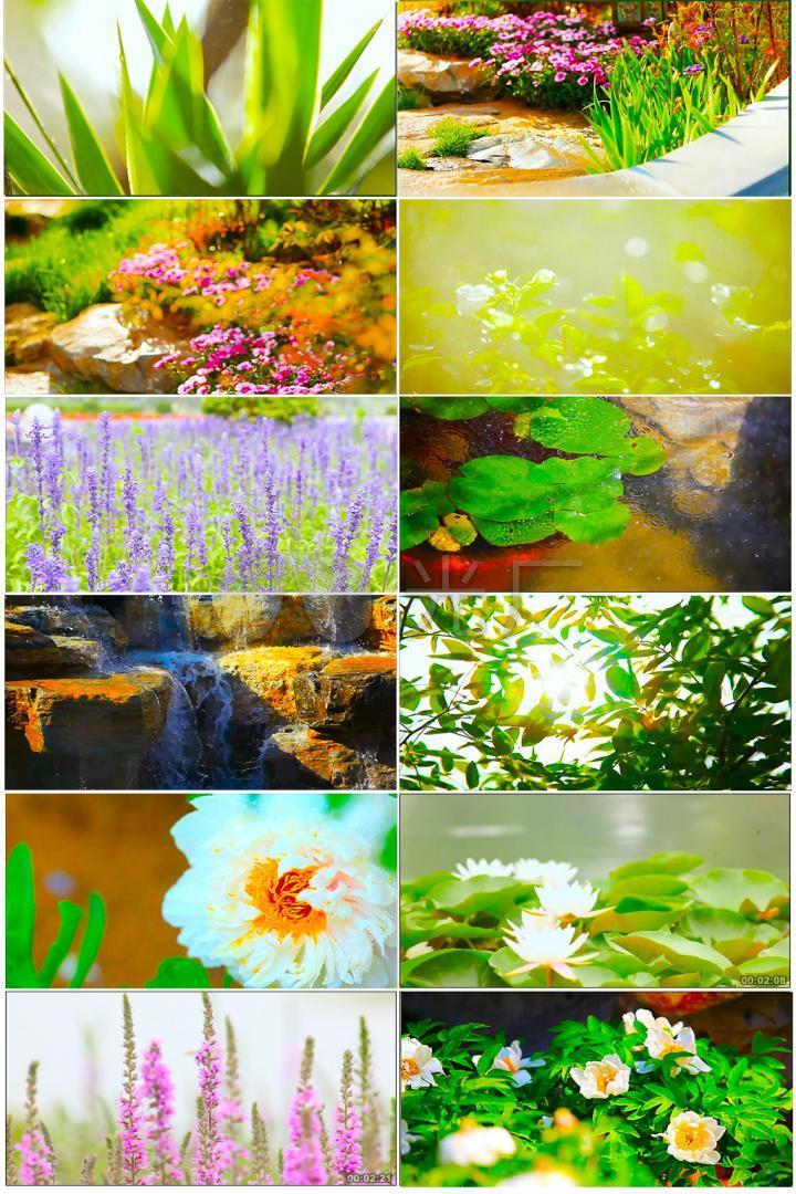 园林公园小清新穿暖花开花草小花