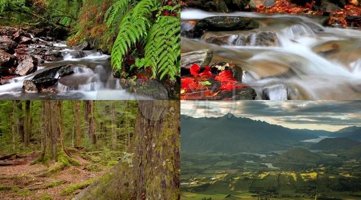 河流树木湖泊视频