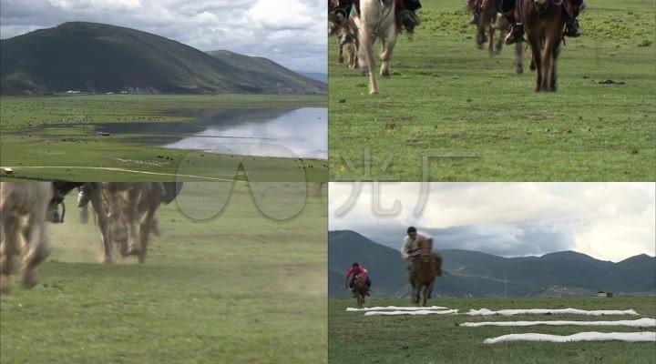 高清实拍美丽大草原马群赛马哈达