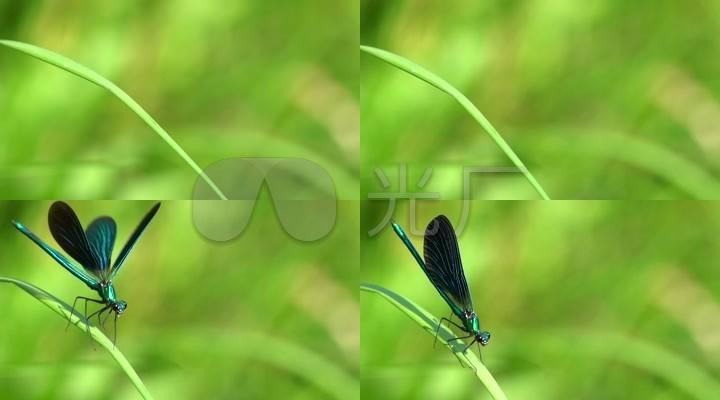 树叶蜻蜓手工制作图片