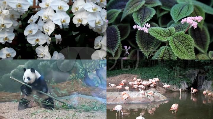 动物园植物园海底世界