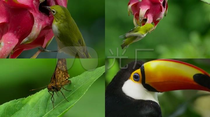 向日葵花鸟动物自然风景生态环境