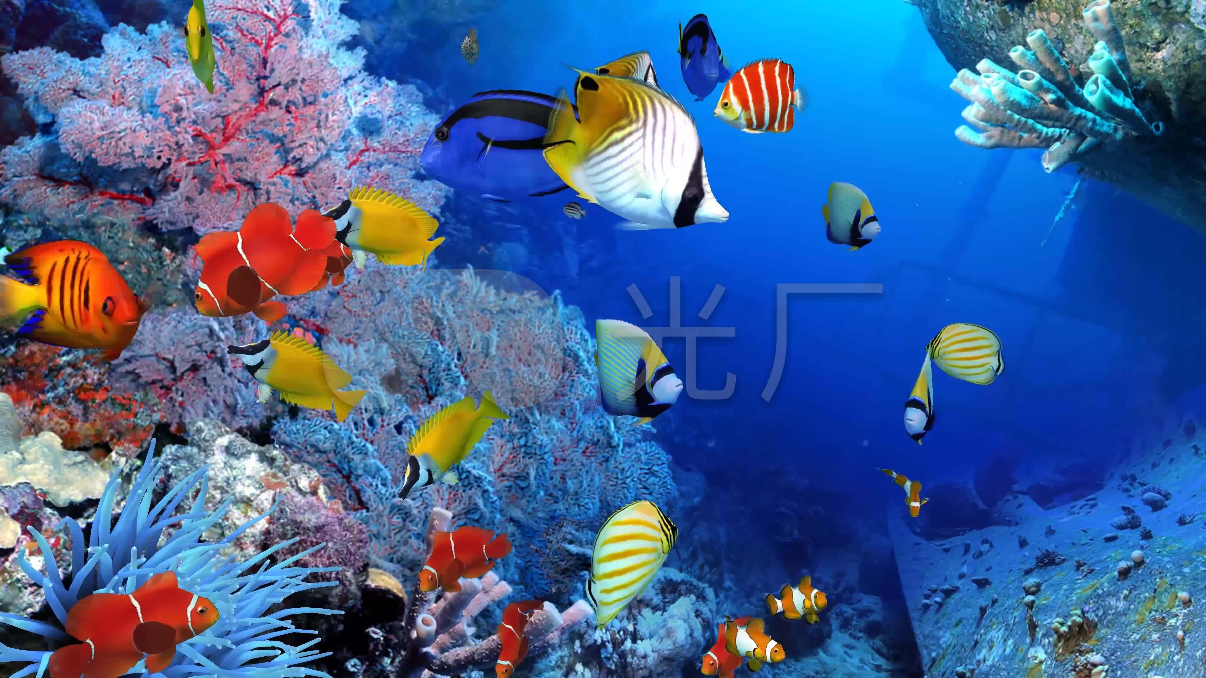 4k三维3d海底世界水族馆海洋海底鱼群_3840x2160_高清
