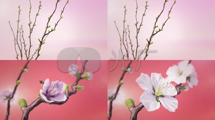 花开春天鲜花绽放盛开3d动画
