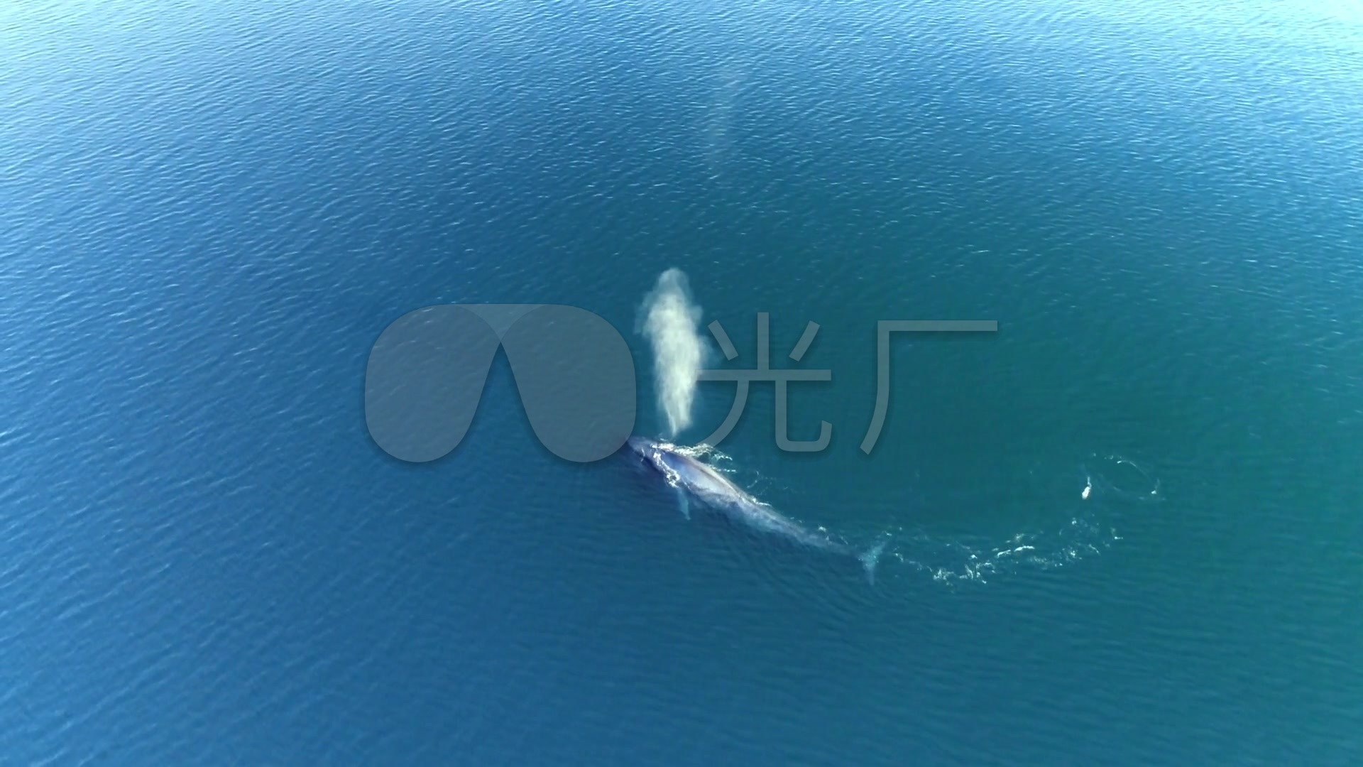 大素材视频高清_1920X1080_素材苹果鲨鱼下被范冰冰强爆视频视频图片