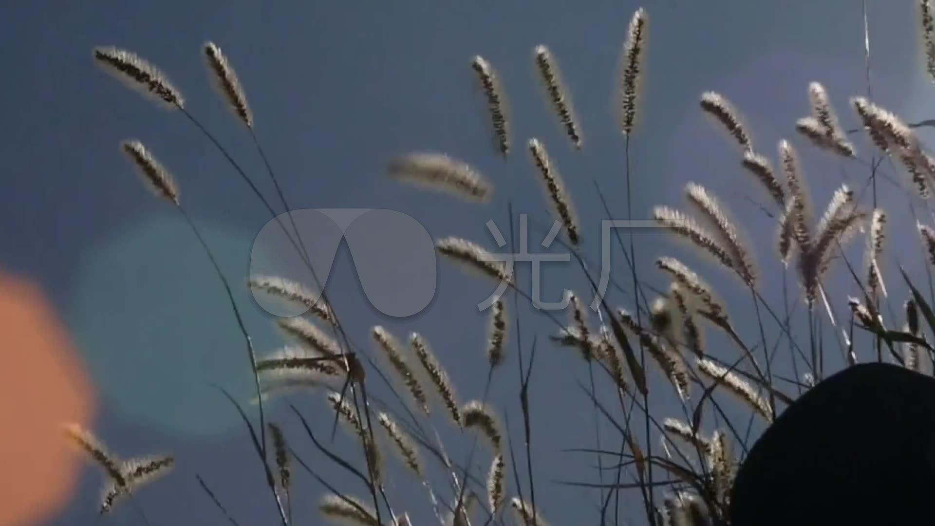 老树昏鸦树影唱歌狗尾巴草特写墙夕阳空境_1的风吹表情包图动图片