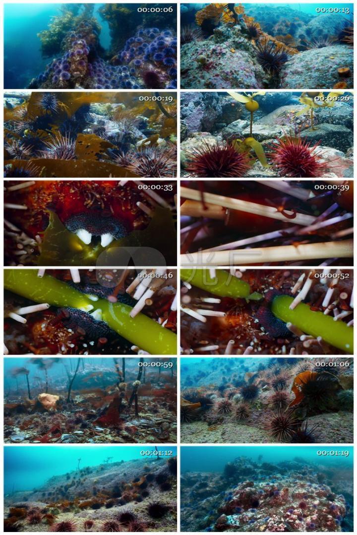 延时拍摄海洋生物海胆