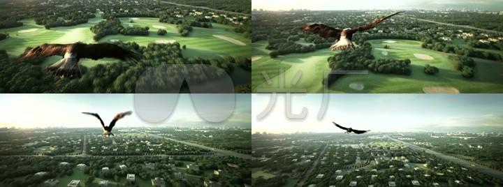 城市鸟瞰老鹰飞翔