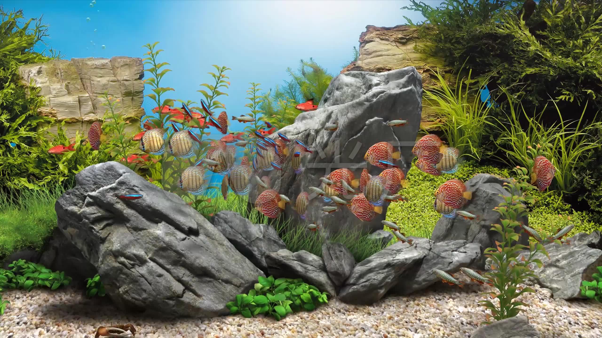 3k3d唯美梦幻海底世界鱼群海洋生物