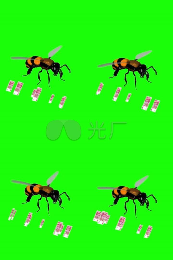 蜜蜂钱粒子动物绿布门票手机巧影普吉岛海豚v蜜蜂蓝布多少钱图片