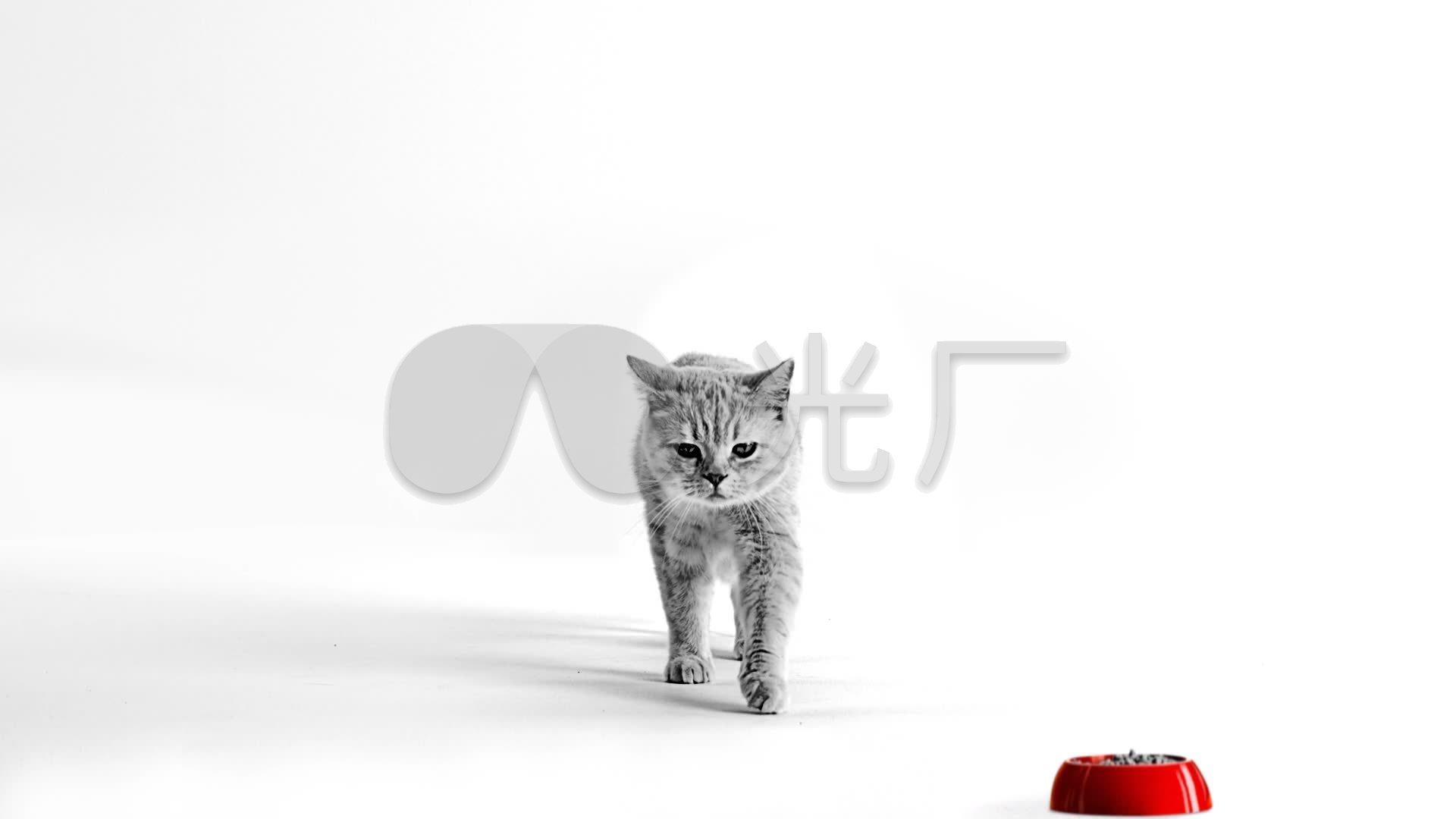 唯美可爱猫咪宠物世界