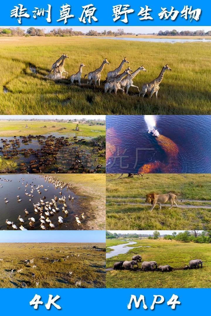非洲大草原野生动物