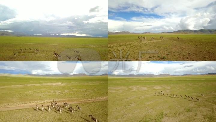 西藏藏视频航拍云层放牧草原山峰_1920X108彭斯演讲的野驴图片