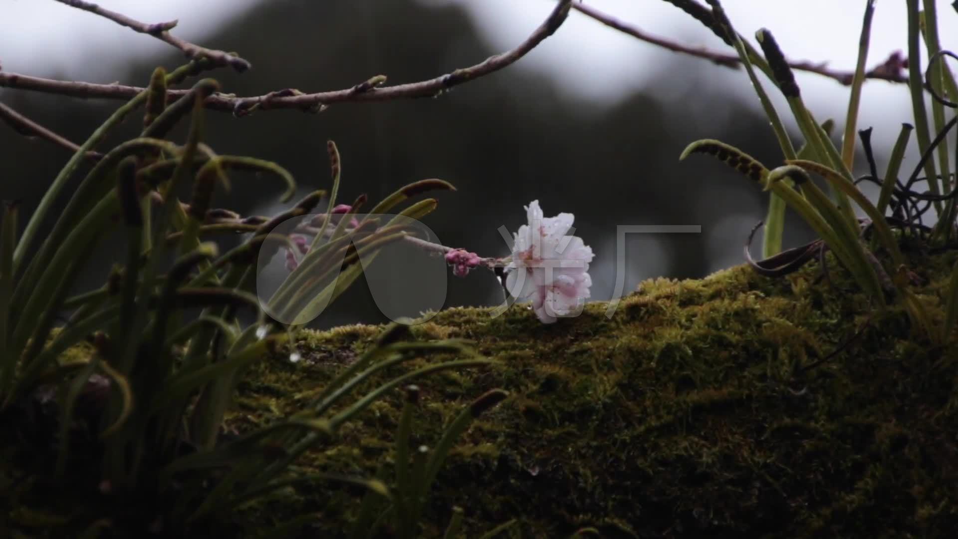 唯美寺庙佛教禅禅意古刹古建筑雨天樱儿意境_1920x图片
