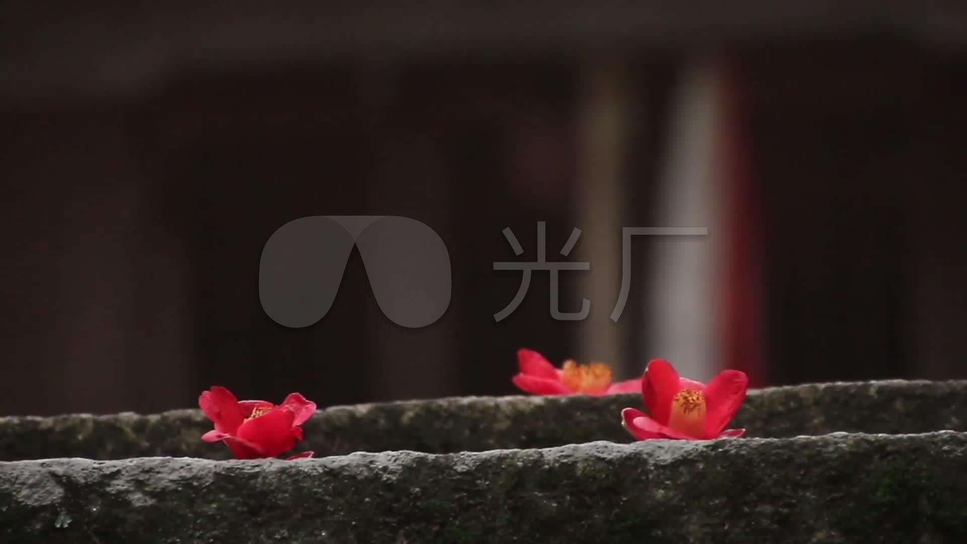 唯美寺庙佛教禅禅意古刹古建筑花儿意境