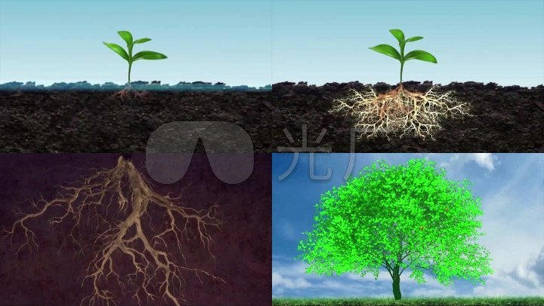 植物根部生长_3无图片
