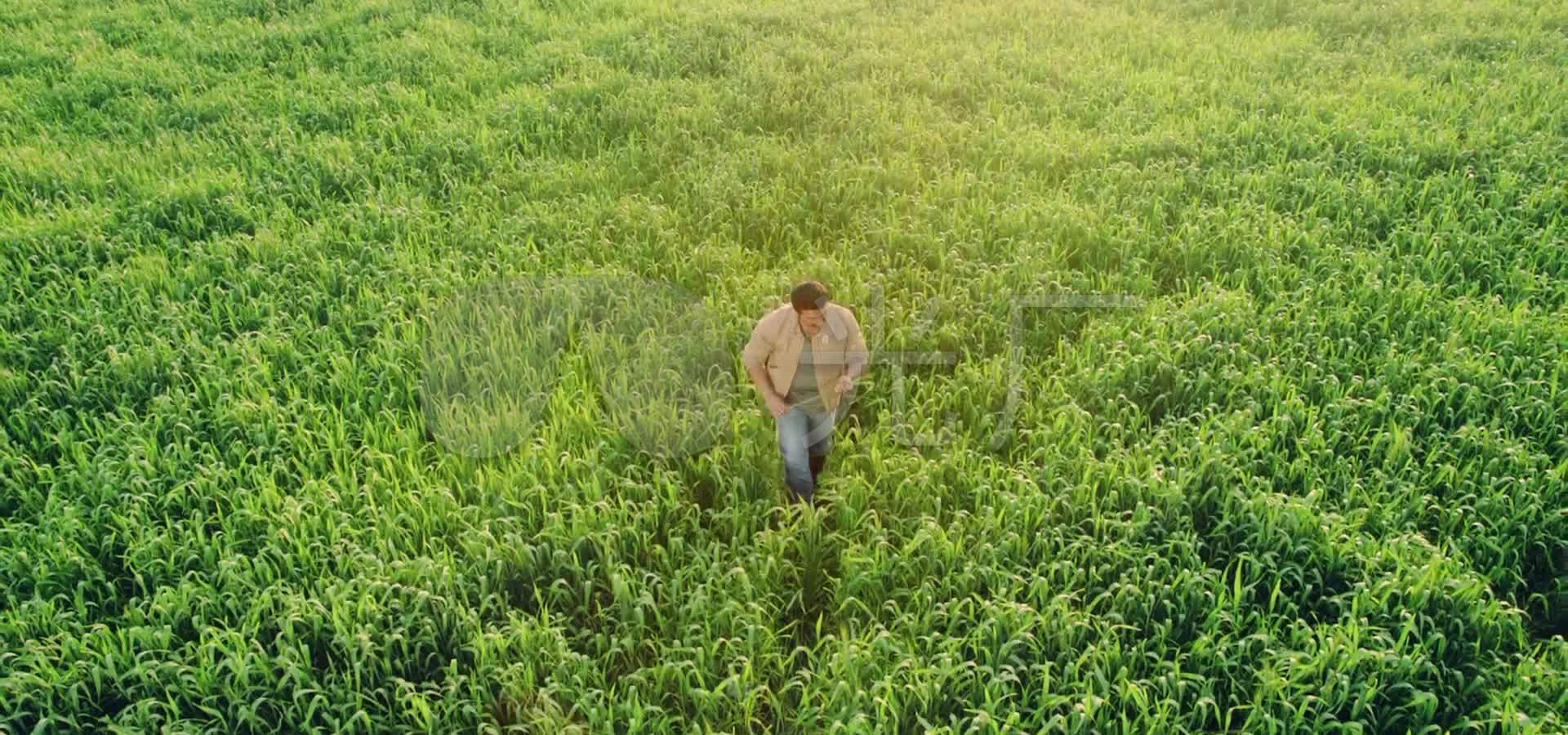 玉米地素材高中_1920X900_高清视频素材下载视频网校视频图片