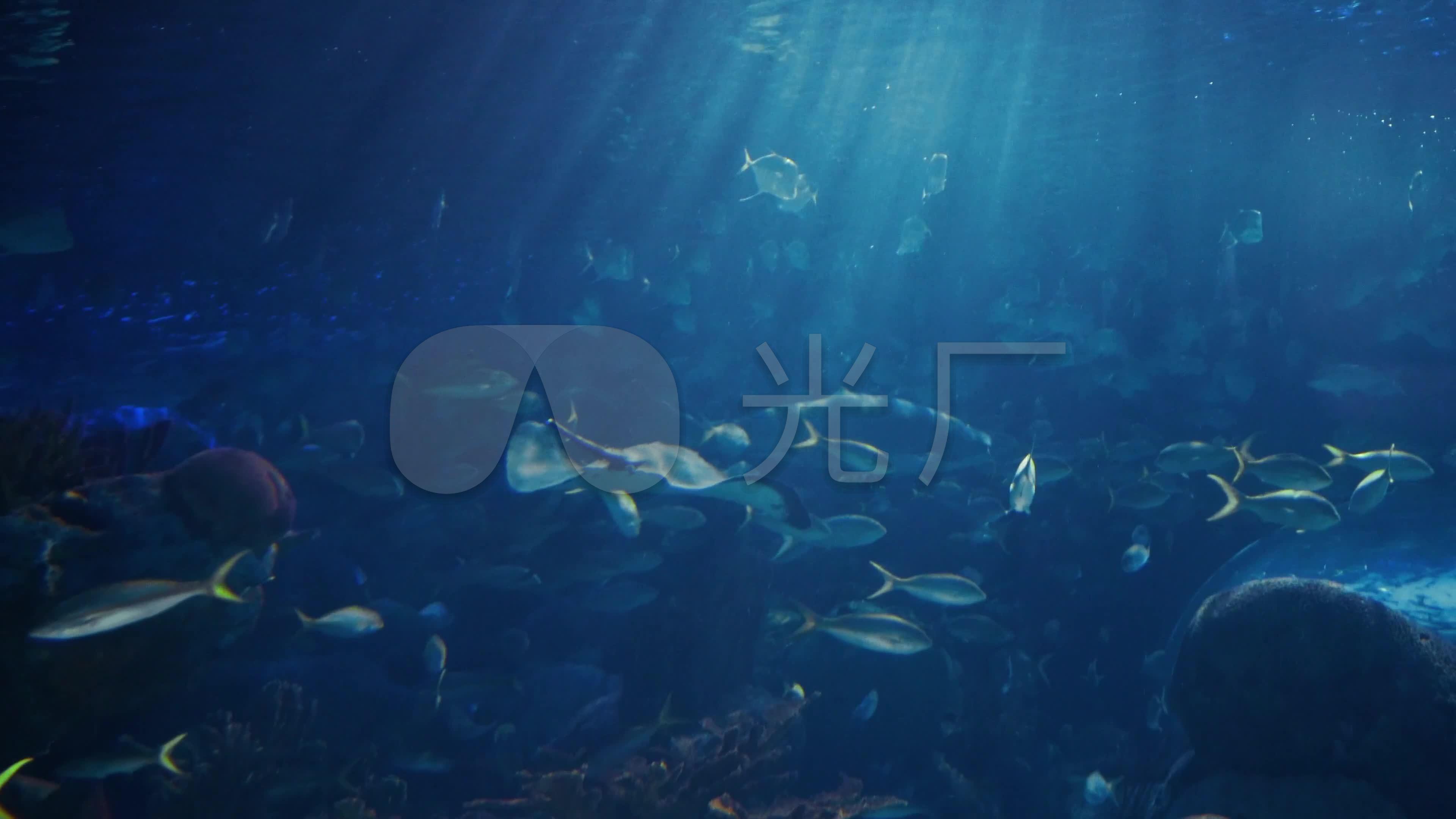 4k海底世界_3840x2160_高清视频素材下载(编号:)_实拍