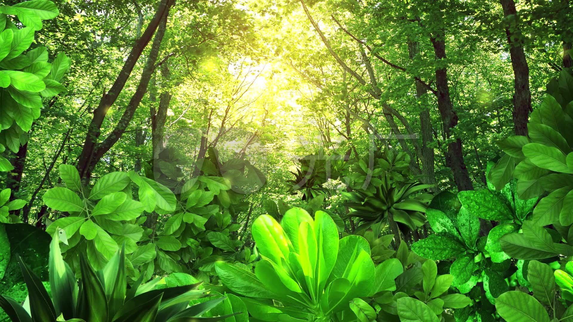 唯美阳光照射森林led舞台背景视频素材图片