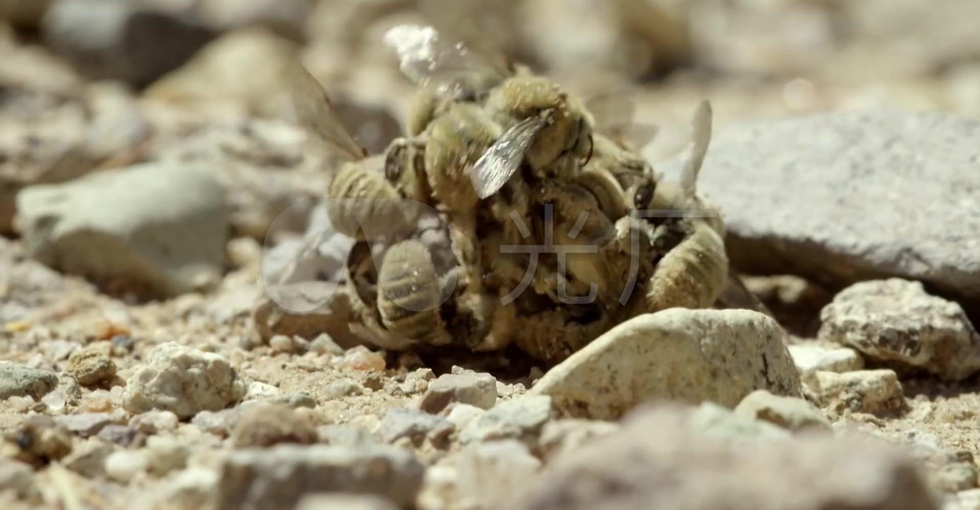 水草微观动物生态鸟类为什么蜜蜂蜗牛会爆缸图片