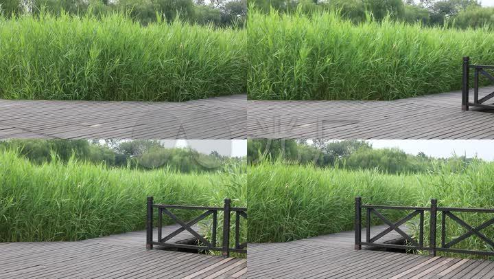 湿地规划案例_湿地公园设计案例_成都活水公园案例