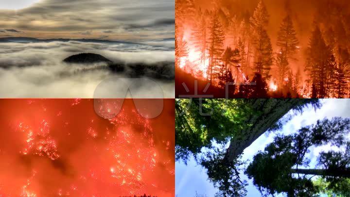 生态环境破坏森林火灾植物再生保护环境