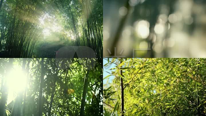 竹子竹林阳光城市旅游文化绿色城市宣传片企业宣传片竹光影意境意向