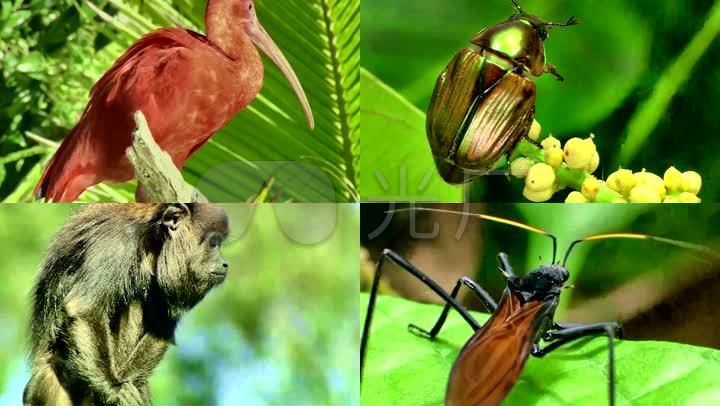 巴西原始森林野生动物昆虫