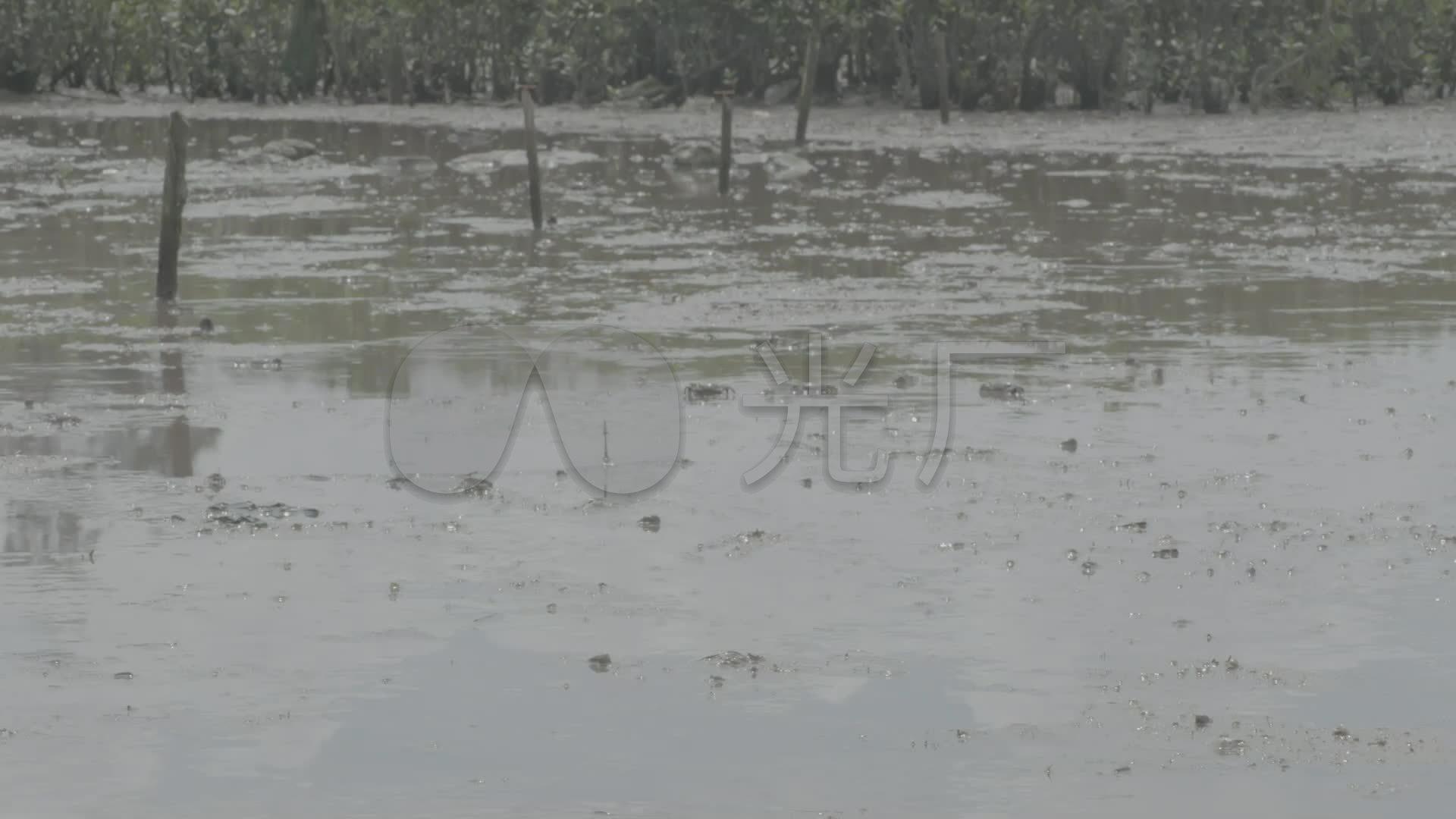 水塘养鱼池水草乡下视频夏季水塘_1920X108介绍水塘鼓浪屿图片