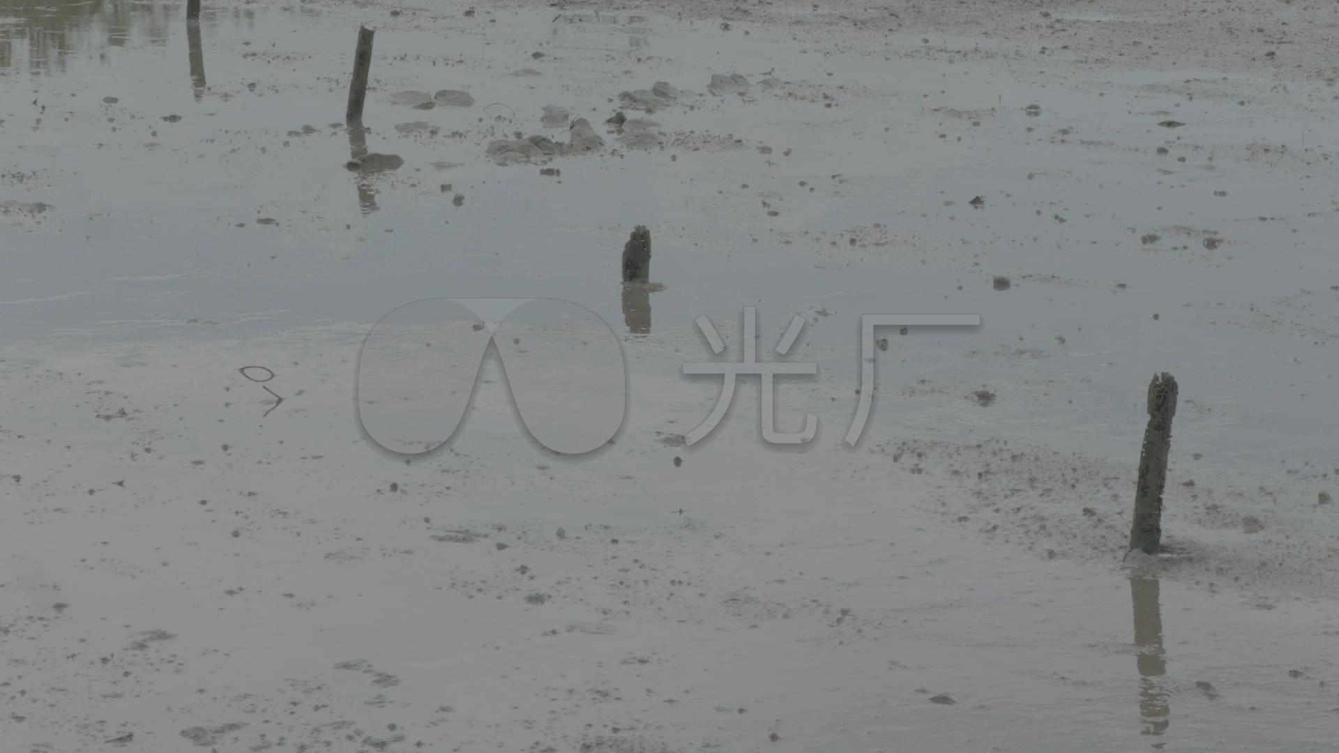 水塘养鱼池水塘乡下水草夏季松鼠_1920X108视频下载水塘图片
