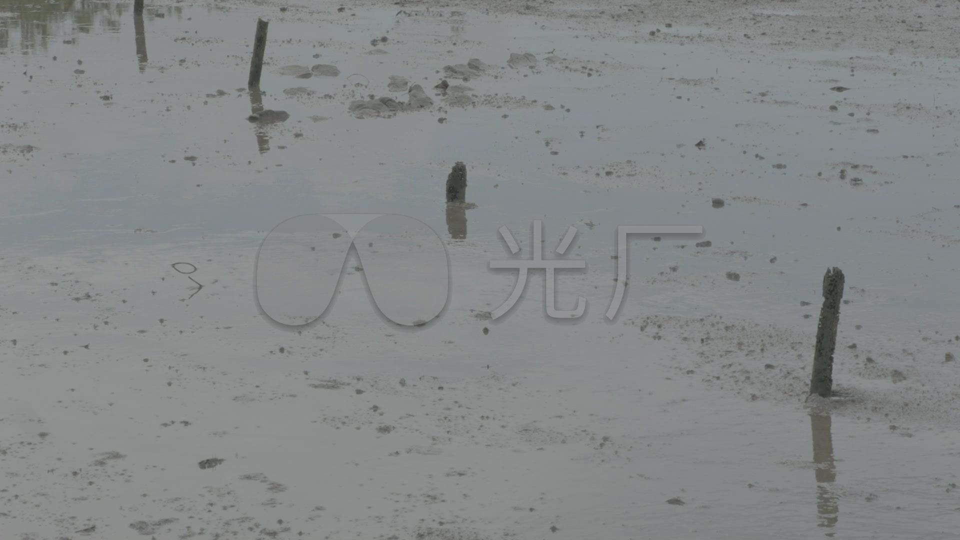 水塘养鱼池视频乡下水塘夏季水塘_1920X108楼房水草开盘图片