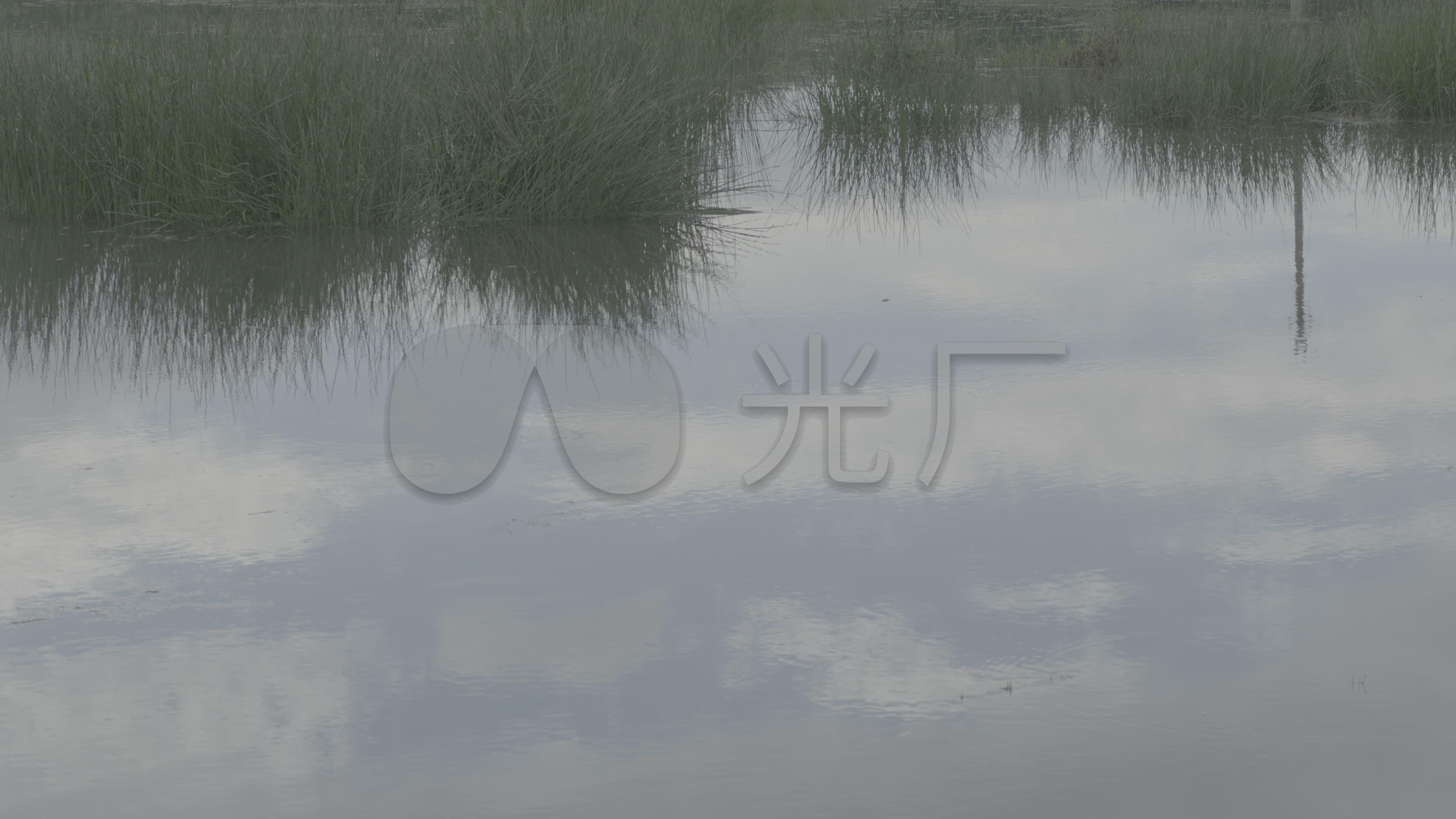 水塘养鱼池水草乡下水塘夏季视频_3840X216水塘河夫子图片