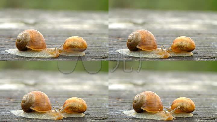 字母两只蜗牛小大象大图片蜗牛动物小蜗牛【声明】vj师网原创所有作mv字母自然蜗牛动物图片