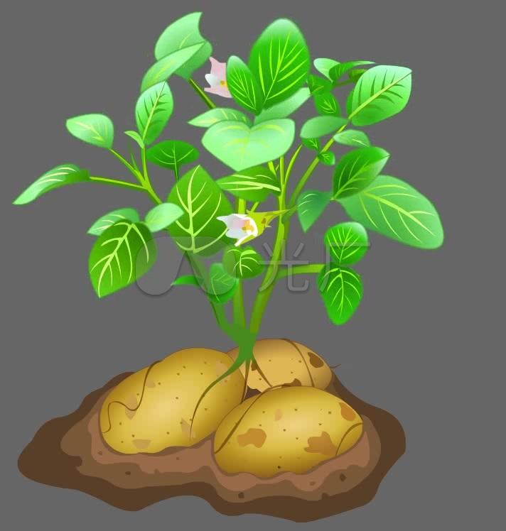 盆景 盆栽 植物 712_748图片