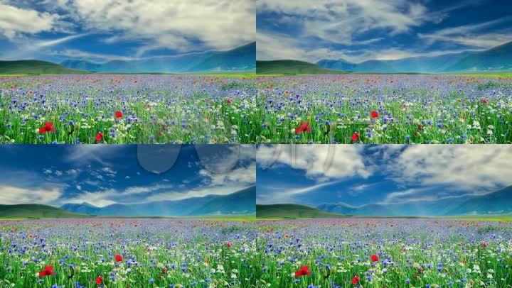 自然風景花海花草植物草地鮮花地春天背景