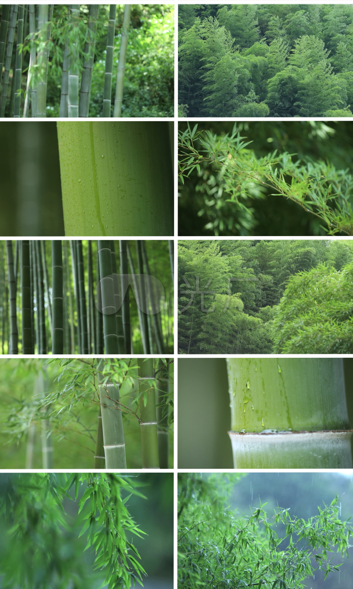 唯美风景绿色大自然竹林写意自然环境四川宜宾生态自然竹子生长竹林