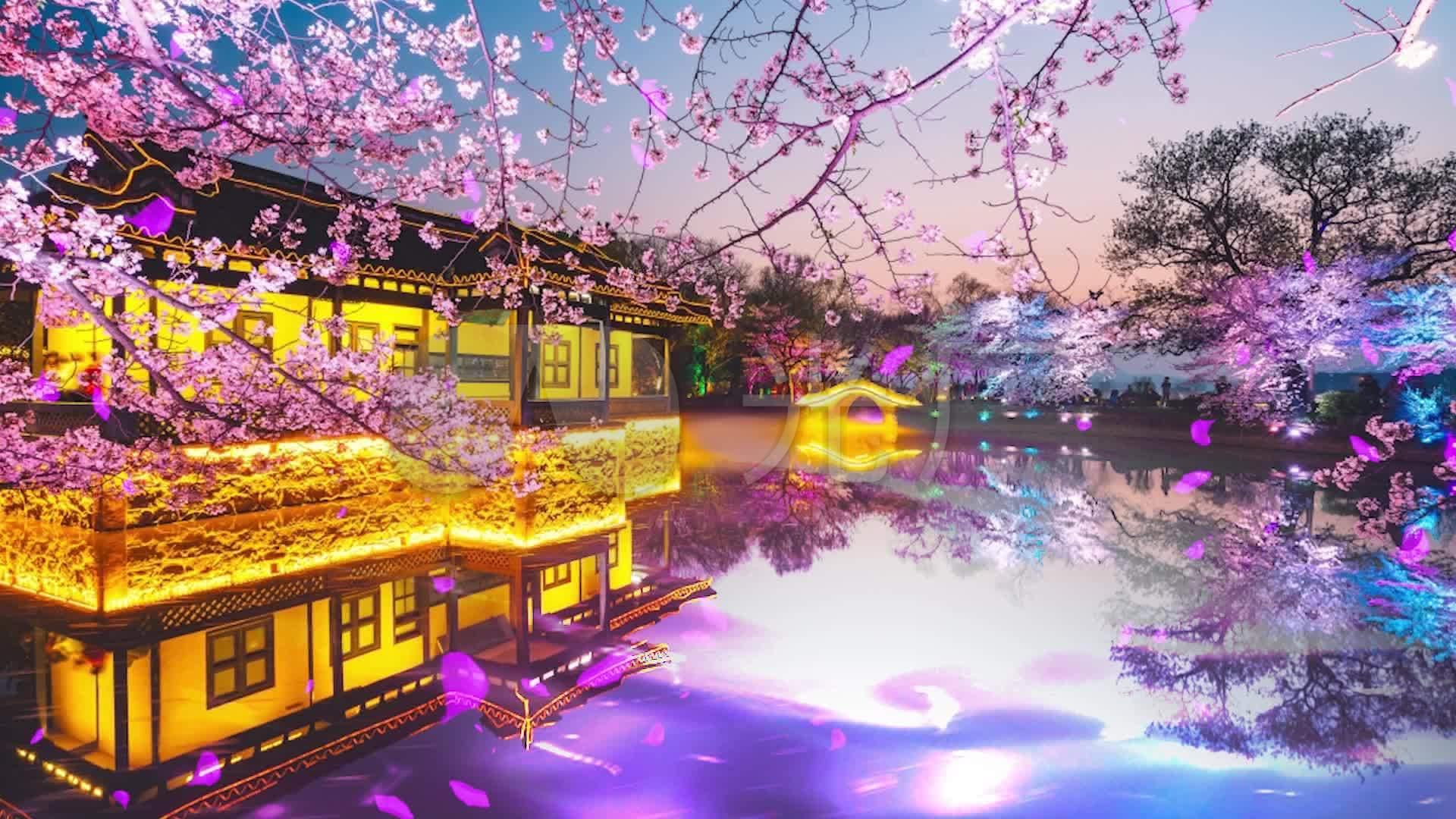 古筝樱花背景舞台_1920X1080_主题视频素材视频电玩高清图片