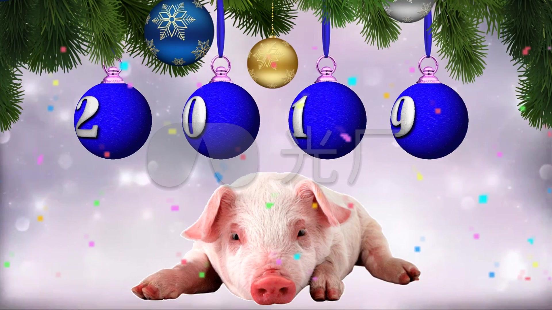 小猪视频下载器_可爱小猪壁纸