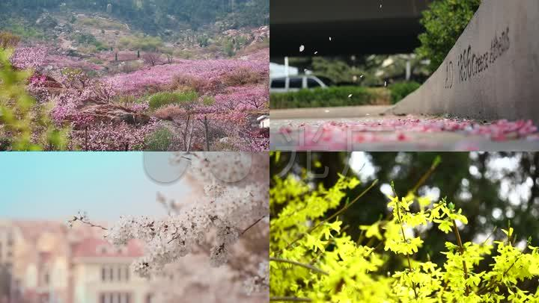青岛唯美城市春天景色花海鸟语花香青岛火车