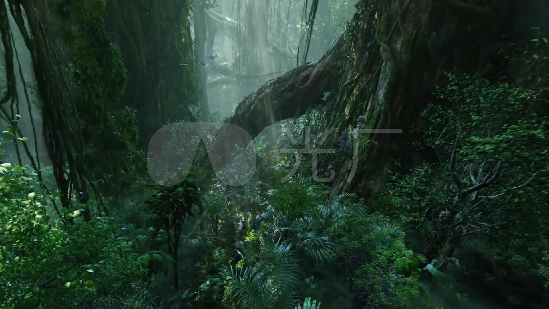 热带雨林大高清沼泽地树根_1920X1080_视频故事幼教视频图片