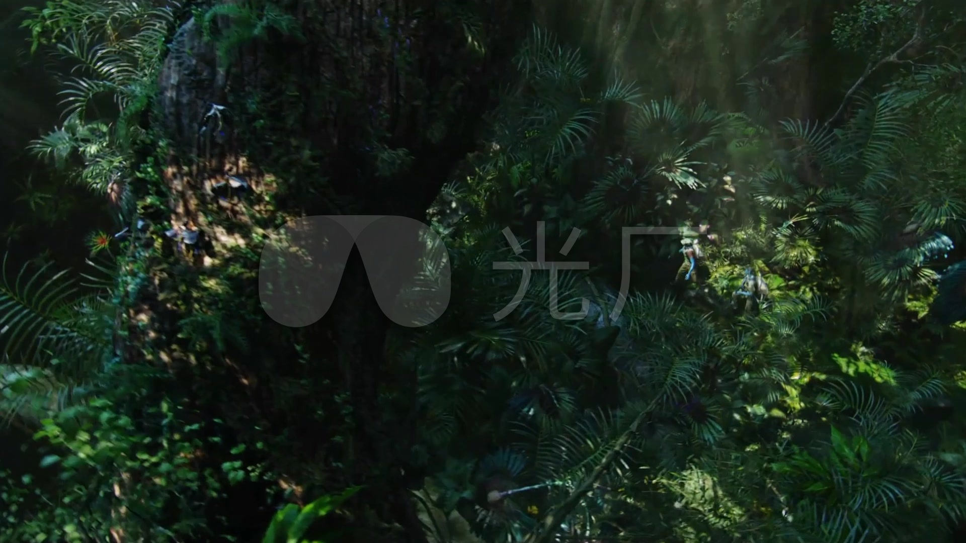 热带雨林大背景沼泽地视频_1920X1080_视频树根动态高清图片