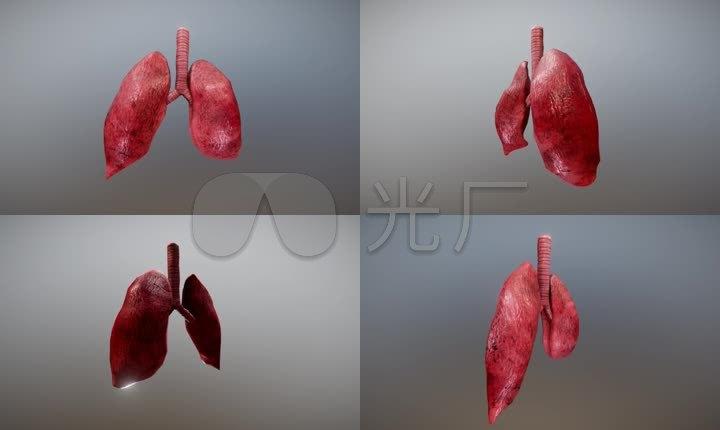 肺部肺部跳动人体结构医疗模型心血管医疗动画恐怖特效素材影视特效