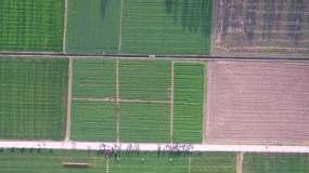 参观考察农田视频素材