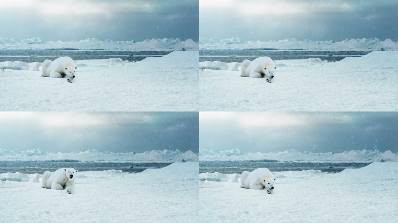 孤独的北极熊
