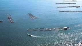 三亚渔业养殖视频素材