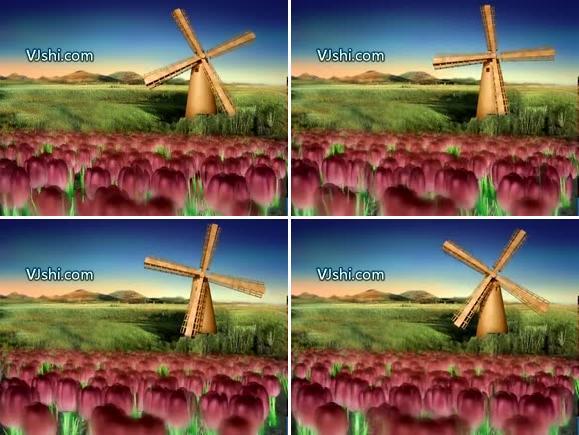玫瑰花和风车