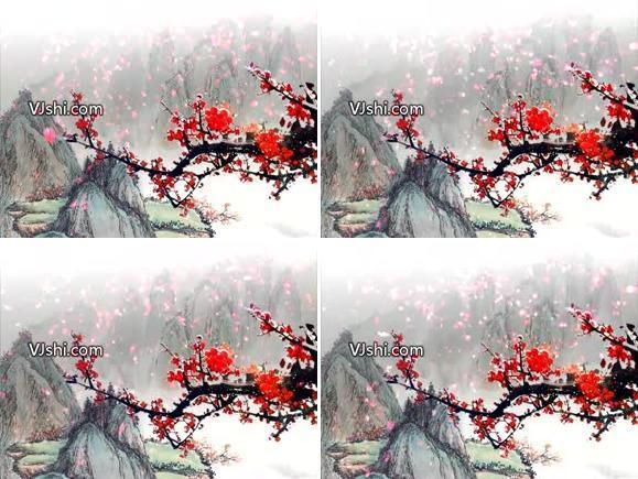 梅花、花瓣飘落.