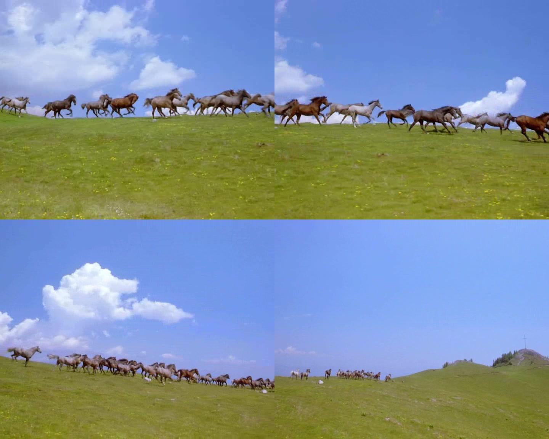 奔跑的马儿骏马奔腾